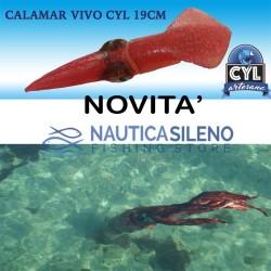 Calamaro  CYL 19 cm
